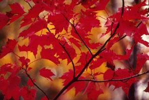 automne-1a